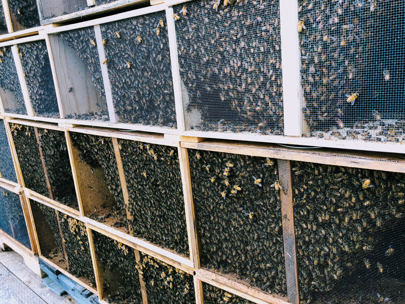 2020 Package Honey Bees (Early Bird Price)
