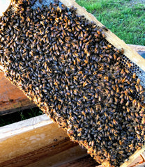 2020 Golden West Apiaries Nucleus Hives