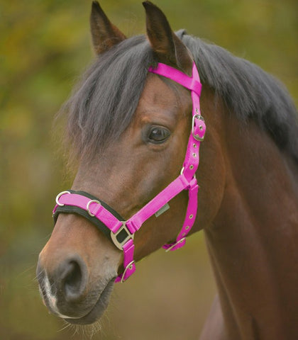 Waldhausen Lunging Halter with Lunge Rope