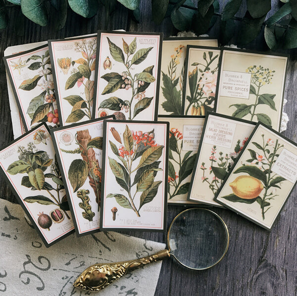 12 pcs Vintage Plants Sticker Tim Holtz Style