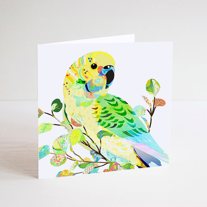 Australian Native Birds Mini Card Set of 8 - Braw Paper Co