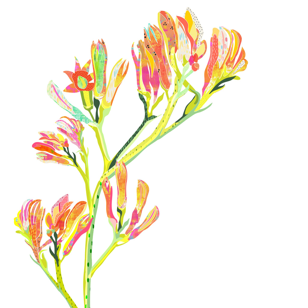 Kangaroo Paws Mini Card - Braw Paper Co