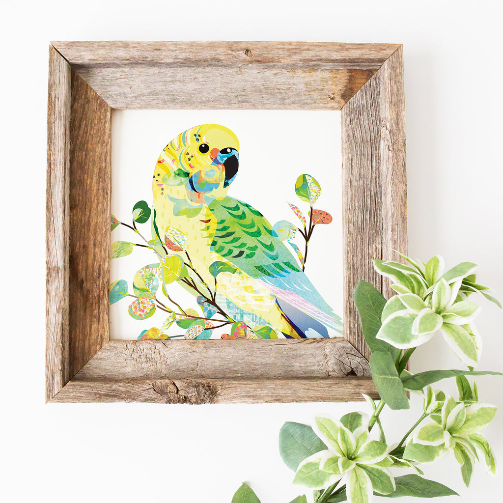 Budgerigar Art Print - Braw Paper Co