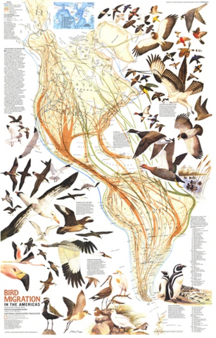 Bird Migration In The Americas Map 1979