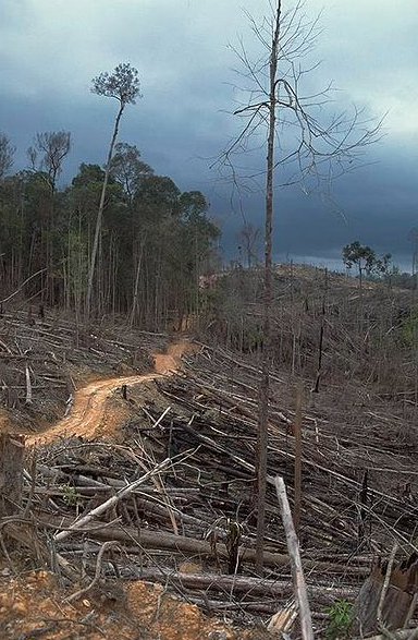 https://commons.wikimedia.org/wiki/File:Deforestation_near_Bukit_Tiga_Puluh_NP.jpg