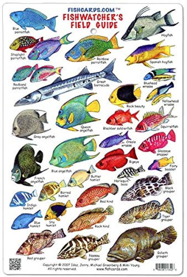Cover of Great-Barrier-Reef-Fishwatcher's-Field-Guide-