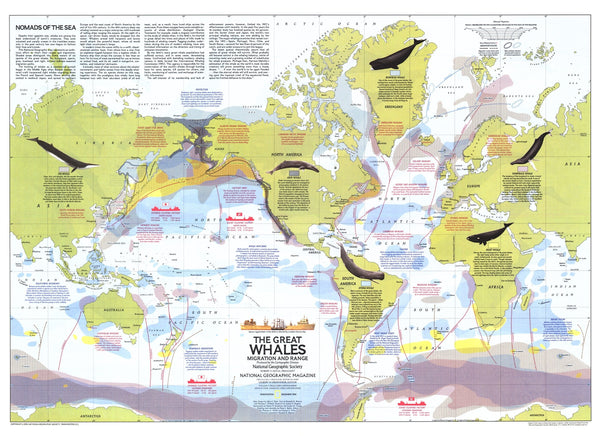 Great Whales, Migration And Range Map