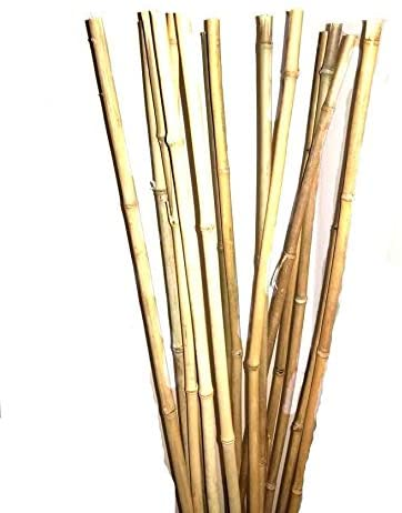 Natural Thick Bamboo Stakes About Half Inch Diameter - Pack of 8 - Natural Yellow