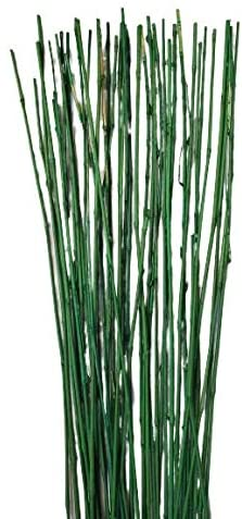Natural Thin Bamboo Stakes About 6 Feet Tall - Pack of 20 (Natural Green)