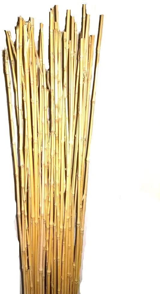 Natural Thin Bamboo Stakes Over 5 Feet Tall - Pack of 20 - Natural Yellow