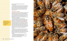 Load image into Gallery viewer, Beekeeping for Beginners: How To Raise Your First Bee Colonies - DewBarBeekeeping