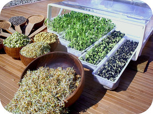 Benefits of Sprouting: Why Should You Eat Sprouted Grains and Beans?