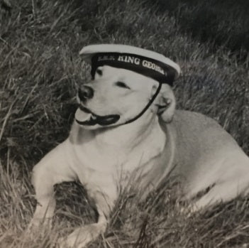 Dog in a Sailor's hat