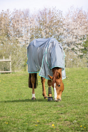 Jasmine Punter Review - Waterproof Fly Rug