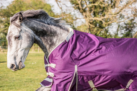 Purple Swish Horse Rug