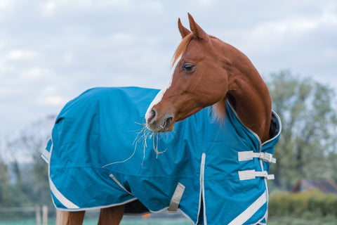 Turnout rug to fit arab horse