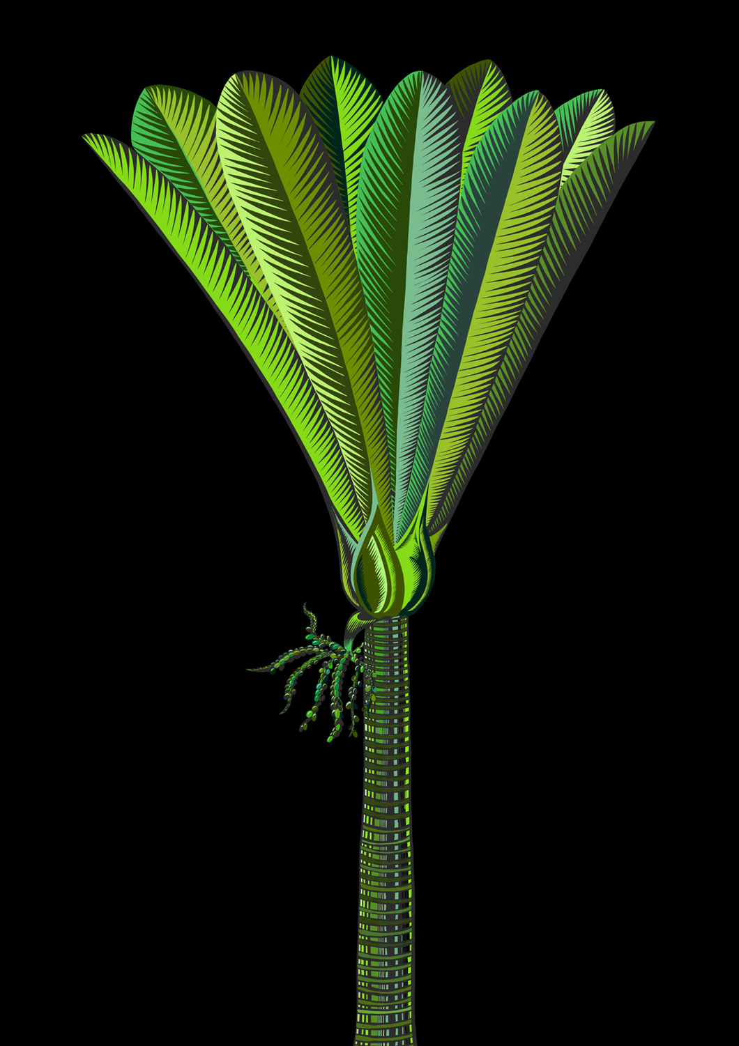 Nikau 4 with Black Background