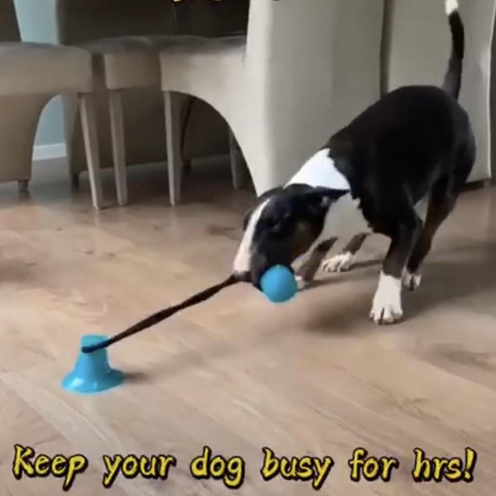Suction Cup Dog Toy - PetNow