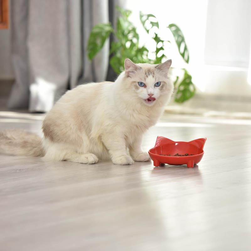 Skid-Resistant Melamine Pet Bowl for Cats and Dogs - PetNow