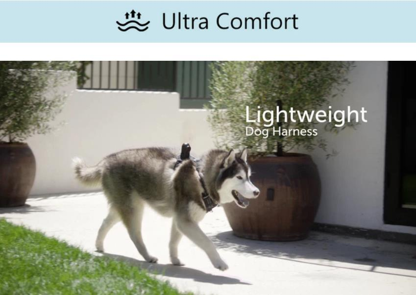 Wearable Smart Pet Camera for Dogs - PetNow