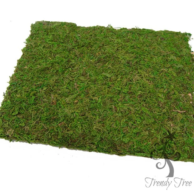 New Product - Moss Cloth