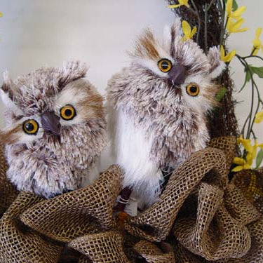 New Feathered Owls from RAZ