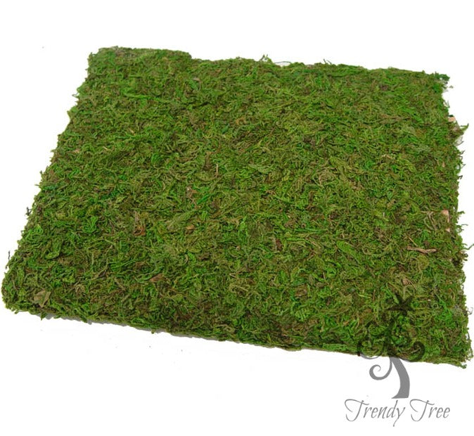 2242--moss-cloth-trendytree