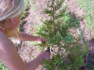 maggie trimming trees