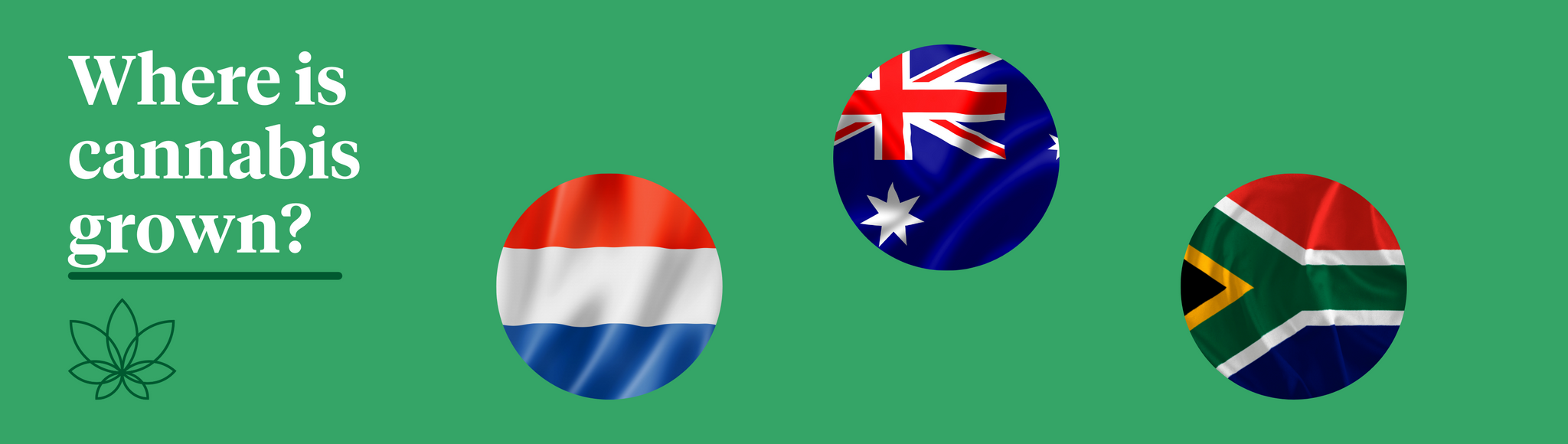 """A green background with three flags of the Netherlands, Australia and South Africa with white text saying """"Where is cannabis grown?"""""""
