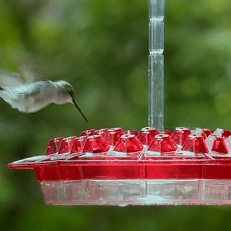 Hummingbird Feeder With Perch
