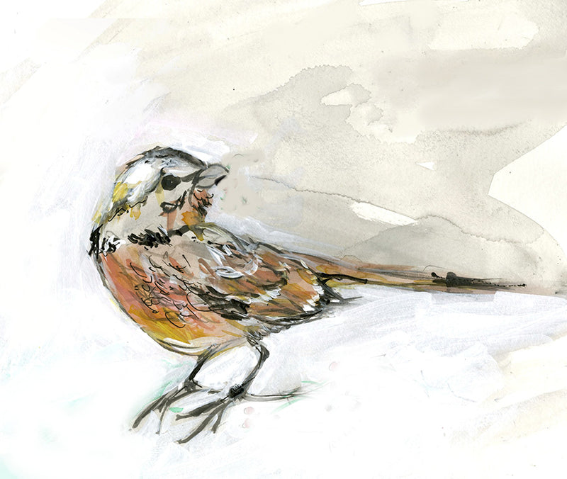 Blog: Called to Paint Birds