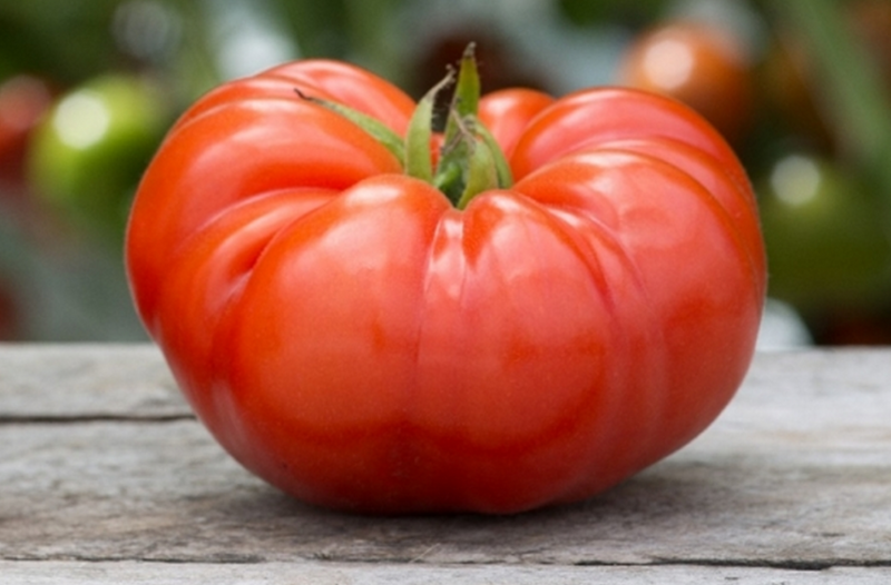 Blog: Just Another Beefsteak Tomato