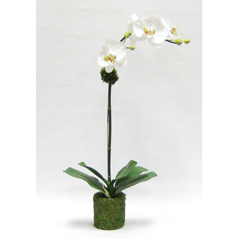 Drop In White & Green Orchid Artificial in Moss Pot