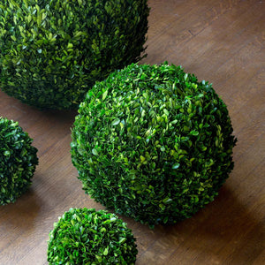 Preserved Boxwood Ball, multiple Sizes