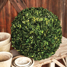 Load image into Gallery viewer, Preserved Boxwood Ball, multiple Sizes