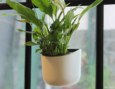 Eden Suction Planter by Okidome
