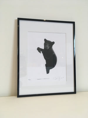 Ray Fox M'Koohns (Little Bear) (Framed)