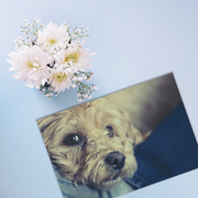 Sympathy Cards for Pets - Memories Series