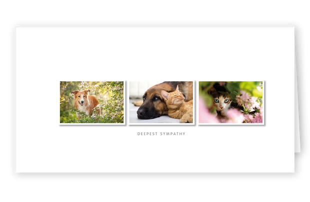 Sympathy Cards for Pets - Best Friends Series