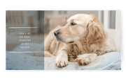 Sympathy Cards for Pets - Forever Series