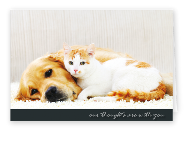Sympathy Cards for Pets - Our Thoughts Series