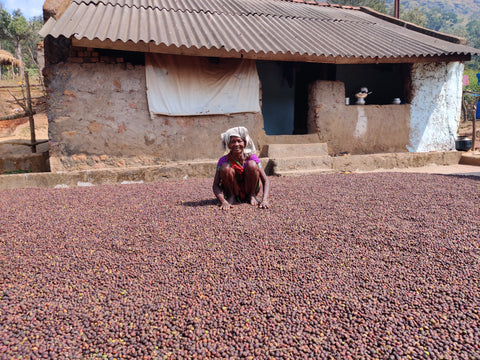 Sun Drying coffee