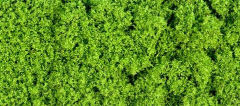GM150  30g Fine light green foliage