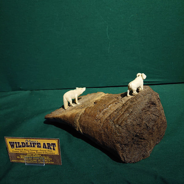 Wolf and Dall Sheep