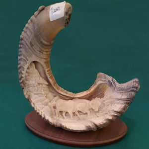 Dall Sheep Horn - Two Dall Sheep