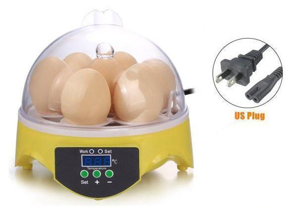 Egg Hatching Incubator - Kid's Science Education