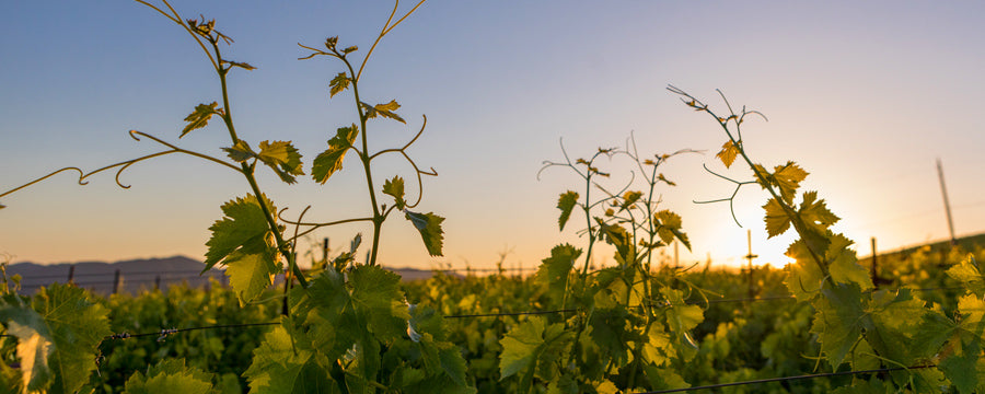 napa-valley-vintners-commitment-to-diversity-and-inclusion