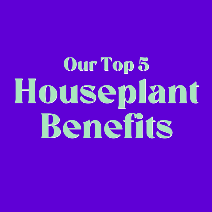 Our top 5 houseplant benefits