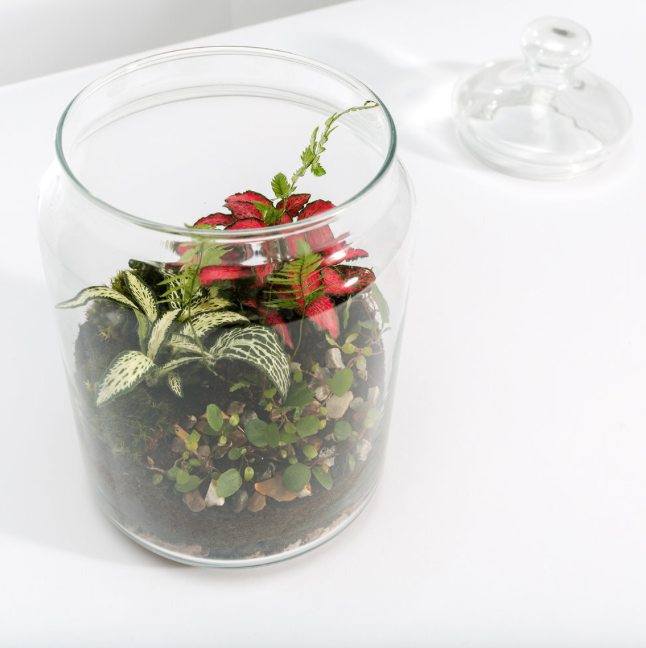 Top 10 Miniature Plants for Closed Terrarium