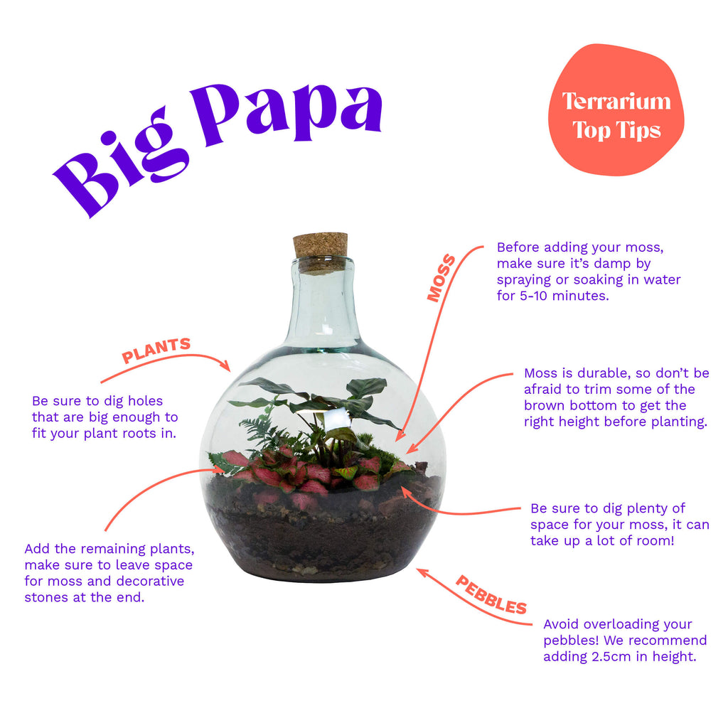 Big Papa - Terrarium Top Tips